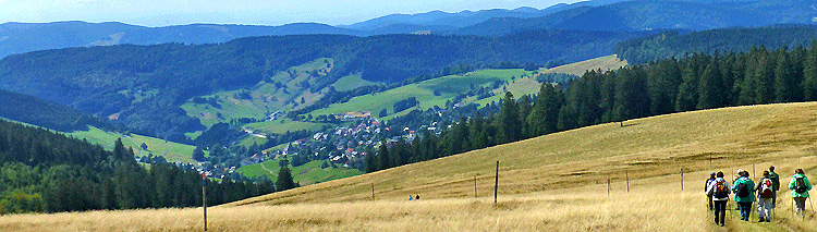 The Black Forest Circuit