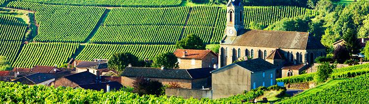 Burgundy - Walks Amongst The Grand Crus