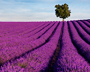 Provence: Luberon, the heart of Provence