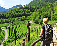 South Tyrolean Wine & Alpine Pasture Trail